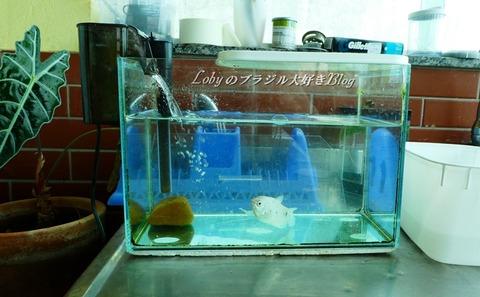 水槽フィルター1