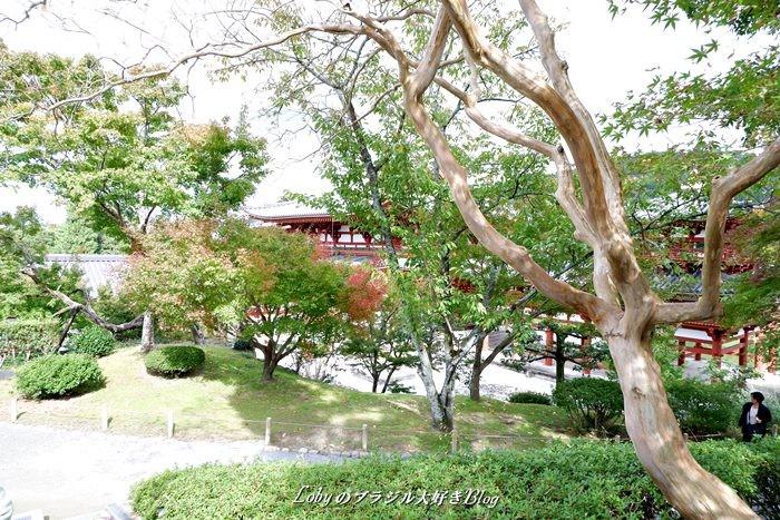 0-平等院6庭園