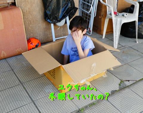 1箱入り息子4