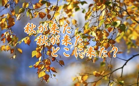 秋が来たどこに来た
