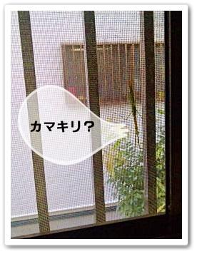 mushi20110912.jpg