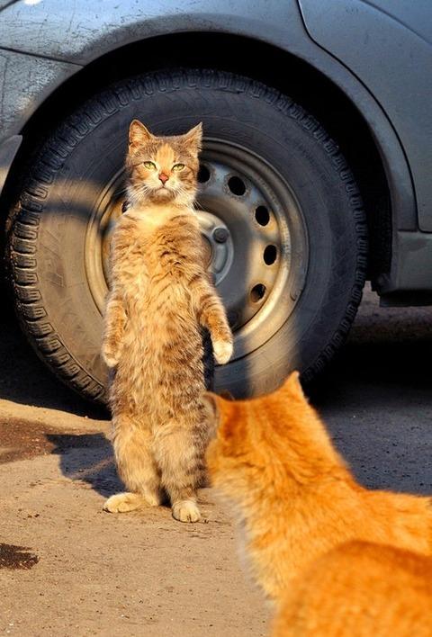 猫 かわいい 画像