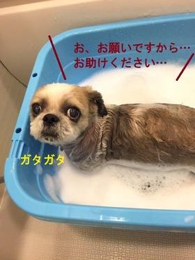 入浴中ポコさん