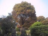 雑司が谷墓地秋風景
