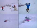 yosi_buried