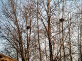 0104鳥の巣1-1.jpg