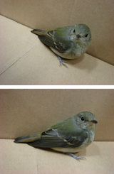 1029動かぬ鳥.jpg