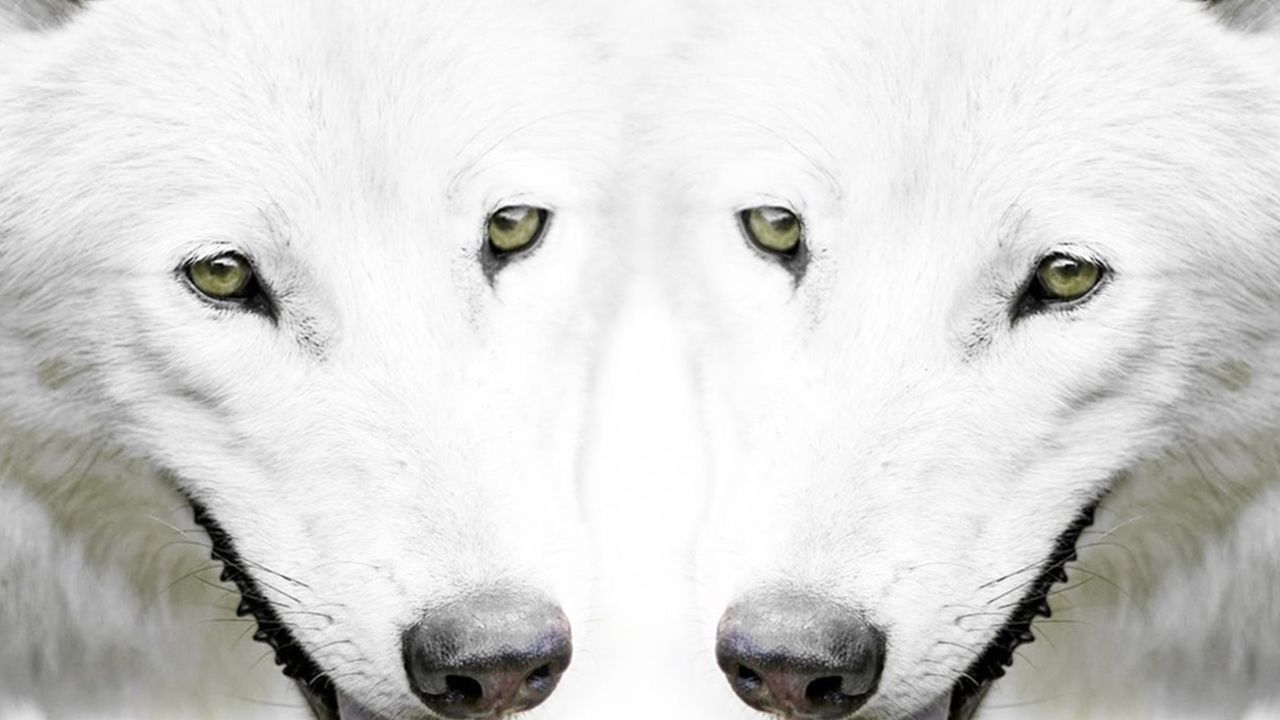 wolf 6 wallpaper full hd tumblr full hd