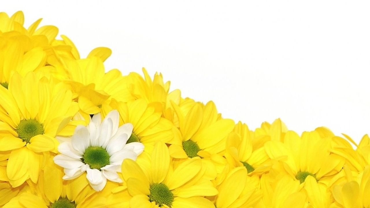 yellow daisies wallpaper full hd tumblr full hd