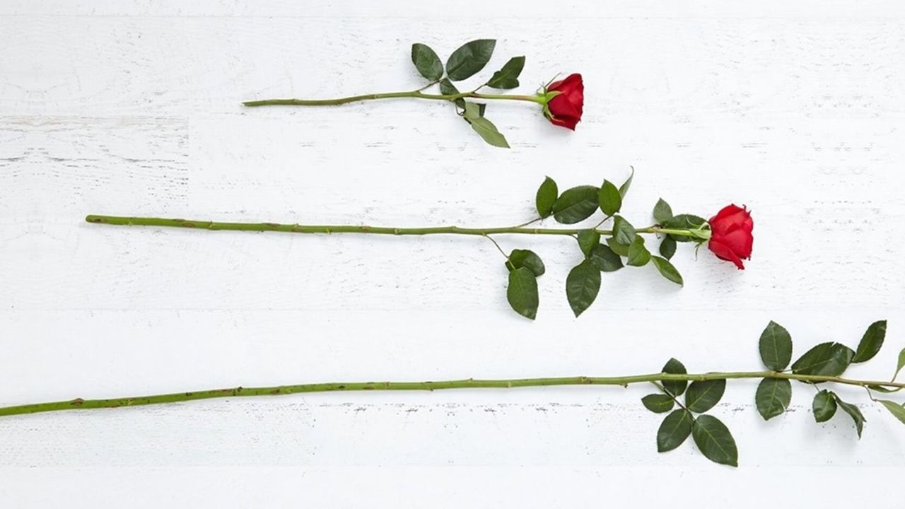 3 three red roses wallpaper full hd tumblr full hd
