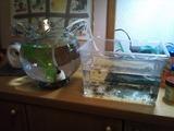 稚魚の移動