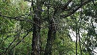 高倉神社(伊賀市) - 卑弥呼の父?が創祀した倉庫の神、桃山期の社殿とシブナシガヤ