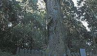 熊野神社(鶴岡市水沢) - 源義家が八幡を勧請した、樹齢2000年の大スギが天然記念物