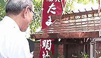 たま神社 - 和歌山電鉄の貴志川線貴志駅に鎮座、駅長猫をたま大明神として祀る
