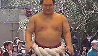 靖国神社で横綱白鵬が奉納土俵入りを披露 - 2012年4月6日、東京都千代田区のキャプチャー