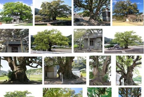 速雨神社 徳島県徳島市八多町板東のキャプチャー