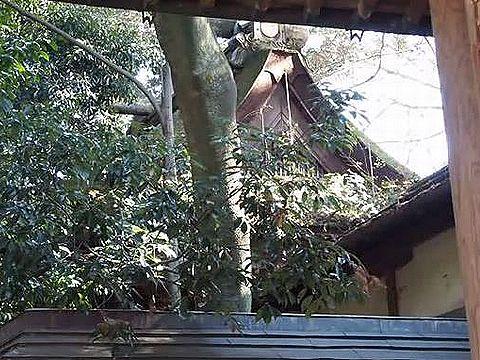 元伊勢「隠市守宮」のキャプチャー