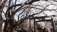素桜神社 長野県長野市泉平素桜