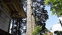 石動神社(新庄市) - 大野東人が植えた樹齢1300年の親スギ、「いぼ石」とウナギ信仰