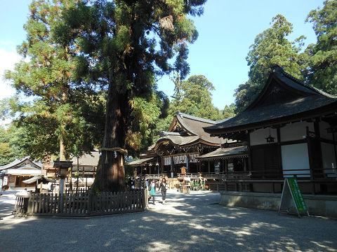 大神神社、巳の神杉を含め拝殿を望む - ぶっちゃけ古事記