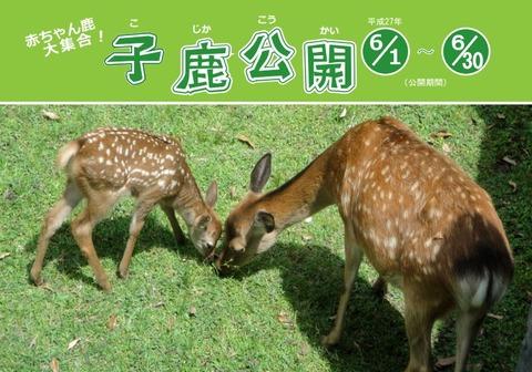 奈良公園・春日大社の鹿の赤ちゃんを見れる! 恒例の「子鹿公開」が6月1日-30日開催中のキャプチャー