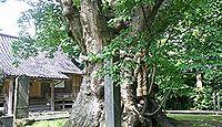 鵜川神社(新道) - 平安期に鶴岡八幡を勧請し八幡宮に、境内に樹齢1000年の大ケヤキ