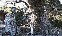 椿八幡神社 - 樹齢1000年の大樟は平安期の現在地遷座記念植樹、宇佐行幸会に関係する古社