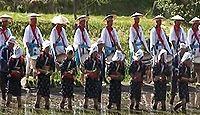 重要無形民俗文化財「塩原の大山供養田植」 - 太鼓や歌の囃子に合せて田植え