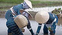 重要無形民俗文化財「佐渡の車田植」 - 古い農耕習俗を示す典型例の1つとして極めて重要