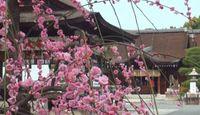 城南宮 - 平安京の南方守護、「方除の大社」として有名な古社 「曲水の宴」も
