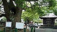 若宮八幡宮(静岡市葵区) - 静岡浅間神社の神主家私邸、家康も休んだ樹齢1000年の大クス