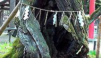 蚕養国神社 - 養蚕の神を祀る会津の古社、樹齢1000年以上の「峰張桜」の下で4月に直会
