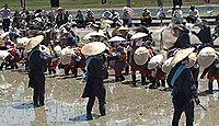 重要無形民俗文化財「安芸のはやし田」 - 歌や、楽器を囃したてながら苗を植えるのキャプチャー