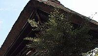国宝「青井阿蘇神社本殿、廊、幣殿、拝殿、楼門」(熊本県人吉市)のキャプチャー