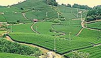 日本遺産「日本茶800年の歴史散歩」(平成27年度)(京都府)のキャプチャー