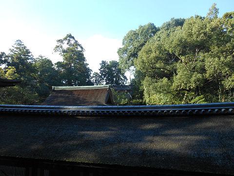 石上神宮の回廊、拝殿(国宝)の屋根越しに禁足地を望もうとする(雰囲気だけ) - ぶっちゃけ古事記