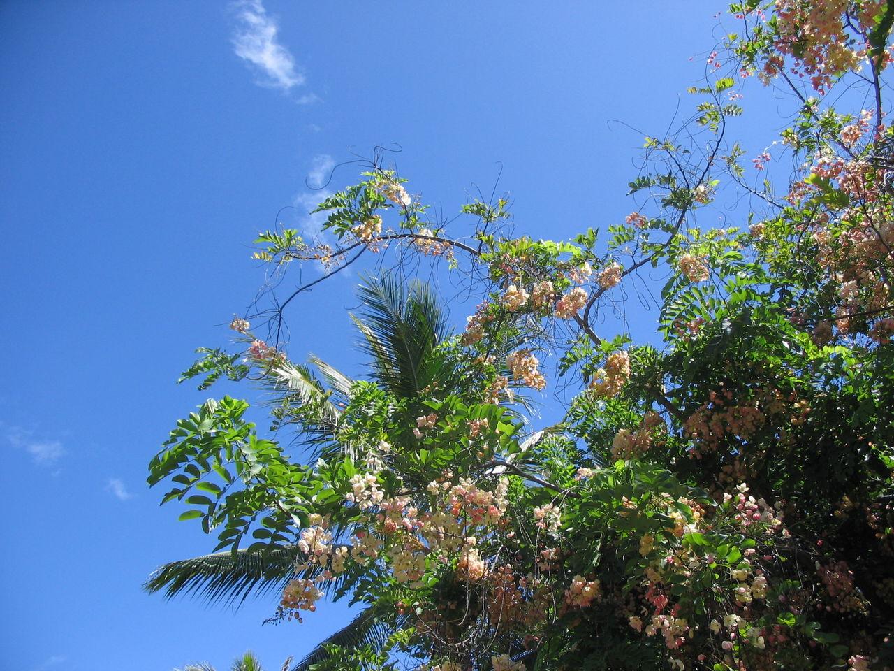 hawaii 2006 085