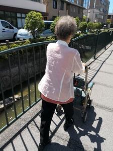 平成30年7月8日散歩リセさん。