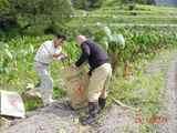 ずいき収穫パパ