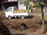 たんぼへ堆肥