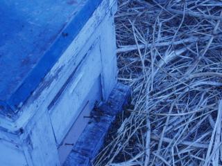 養蜂箱アップ