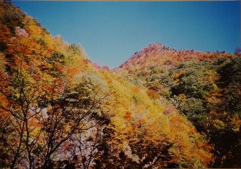 DSC04385三国山林道