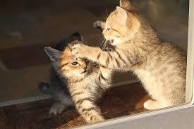 猫 ねこぱんち