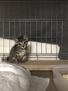 猫 ツイッター ソマリ