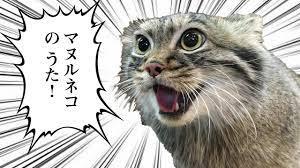 猫 マヌルネコの歌