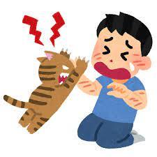 飼い主をひっかくネコ