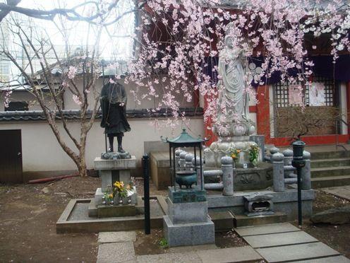 枝垂桜-新井薬師梅照院