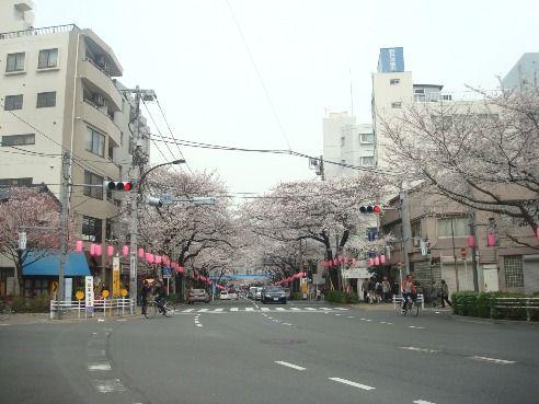 中野通り・新井五差路交差点-桜の名所