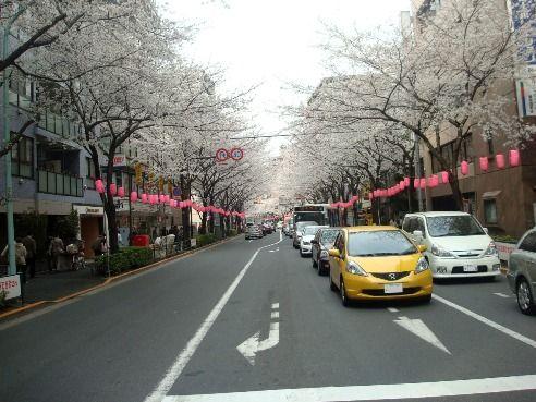 中野通り・新井交差点-桜の名所