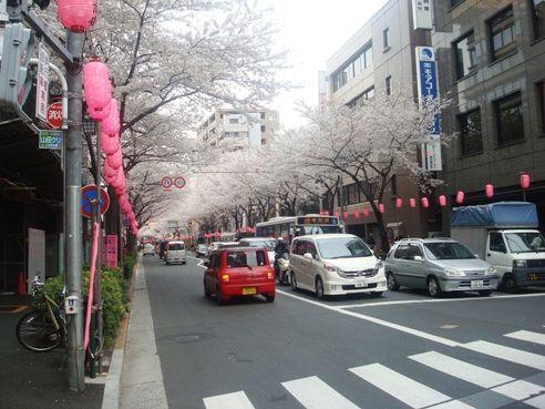 中野通り-桜並木